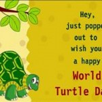 World Turtle Day Greetings
